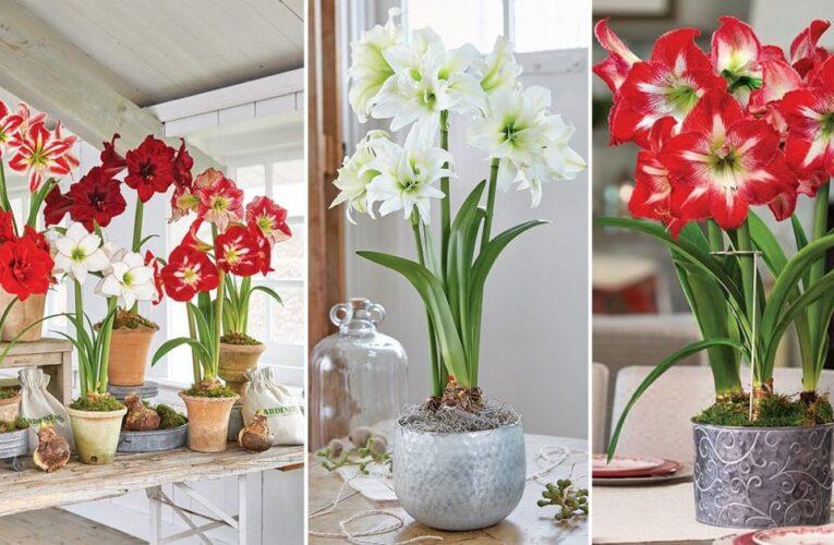 5 BEST TIPS TO MAKE POT FLOWERS LIVE FRESH LONGER