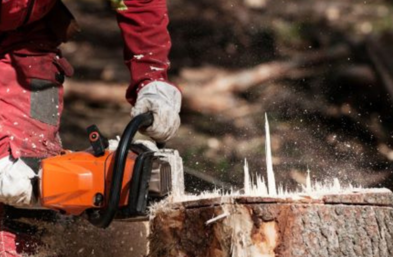 Understanding the Complete Procedure of Tree Removal With Stump