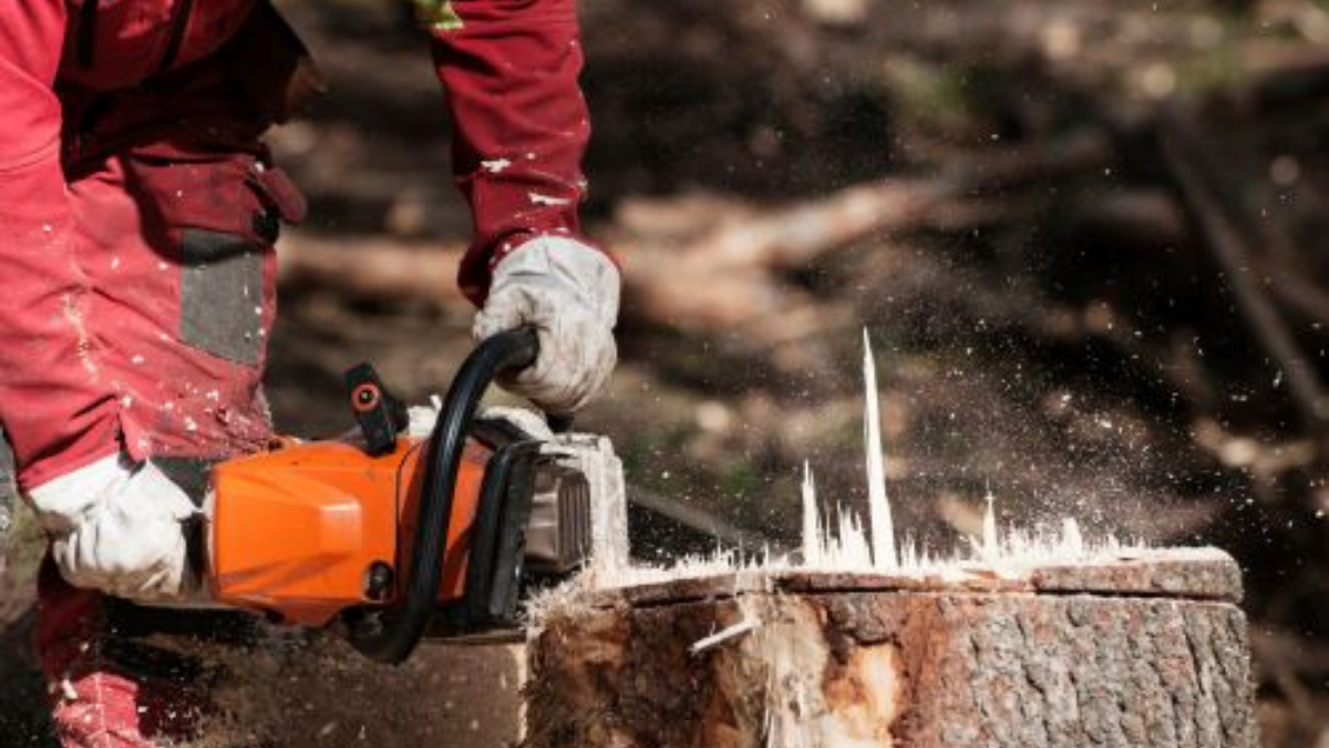 Tree Removal With Stump